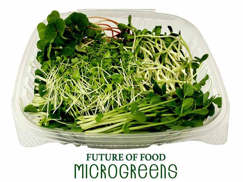Future of Foods Micgrogreens