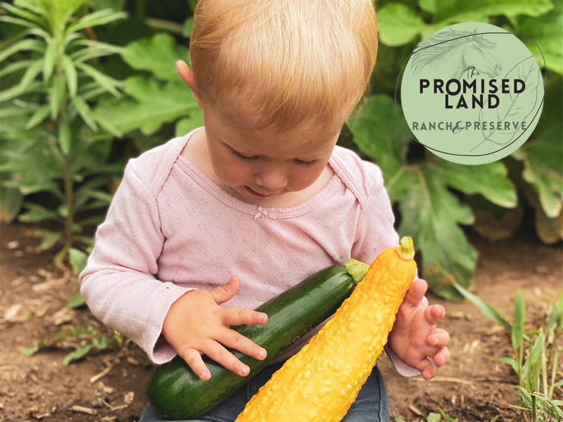 baby holding zucchini